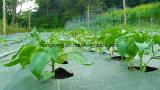 [90غسم-140غسم] سوداء/اعتمد [بّ] خضراء تغطية, [ويد] عائق أبنية في توت أرض حديقة