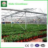 Estufa hortícola de vidro para Growing de flor