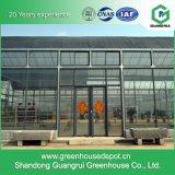 Heißes Verkaufs-automatisches Kontrollsystem-Glasgewächshaus für das Pflanzen