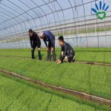Крышка высокого качества UV упорная Nonwoven аграрная
