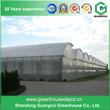 鉄骨構造を持つ野菜栽培者のためのマルチスパンのトンネルの温室