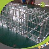 Porcs d'usine de la Chine dans la stalle de gestation de cages pour des truies