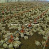 Птицеводства оборудование для производства бройлерных