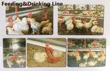 Prefabricated 강철 구조물 닭 농장