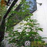 ステンレス鋼ロープの景色の緑の正面の壁のプラント上昇の網