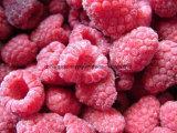 Un approvisionnement stable de haute qualité dans de nouvelles cultures de framboises congelées