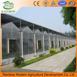 Système d'ombrage de serre agricole bas prix blanc+Soleil bleu de l'ombre Net