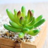 Семьи подарок искусственные цветы Искусственные растения Succulents
