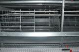 Petite cage automatique de poussin pour la ferme avicole à vendre (type bâti de H)