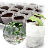 Tessuto non tessuto dei pp Spunbond usato per agricolo ed il giardino