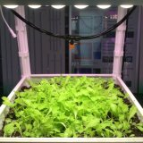 O diodo emissor de luz frondoso das plantas cresce a barra clara
