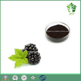 100% HPLC의 자연적인 검은 딸기 추출 안토시아니딘