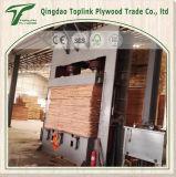 1220*2440*8mm Okoume e Bintangor enfrentou o fabricante da madeira compensada