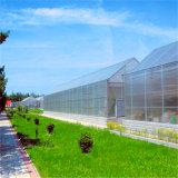 冬の農業の農場のための高出力のAggplantのトマトのきゅうりおよび野菜の農業の温室