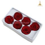 5~6cm préservé de longue durée de la source de gros de fleurs roses fabricant