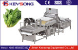 高圧力の泡野菜の洗濯機