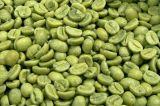 Uittreksel van de Boon van de Koffie van de Levering van de fabrikant het Groene