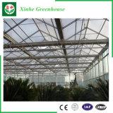 Fleur/fruit/serre chaude en verre culture de légumes avec le système de parasol