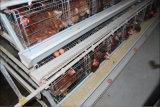 Qualité un type cage de poulet de couche de bâti pour la ferme avicole