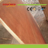 Two Times Press Poplar Eucalyptus contreplaqué de base en bois dur de Shandong
