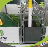 Hoge Strengh Gegalvaniseerde het Werpen Kratten voor het Werpen van de Varkens van het Landbouwbedrijf Apparatuur Gegalvaniseerde Kratten