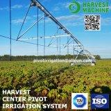 Landwirtschaft Irrigaiton Messingauswirkung-Mitte-Gelenk-Bewässerung-Sprenger