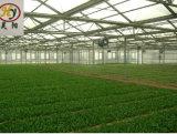 Plaque creuse en polycarbonate serre pour l'Agriculture
