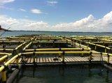 Cages nettes de pisciculture de HDPE pour l'aquiculture avec le meilleurs prix et qualité