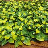 40x60см искусственных вертикальный сад зеленая стена