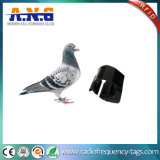 Tag sem contato da microplaqueta do pombo de RFID para o seguimento da galinha