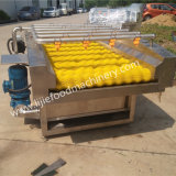 Máquina de lavar da escova da fruta do cacto com 12 meses de garantia e venda quente