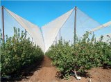 rete della grandine dei fori di 2.8*8mm anti per il frutteto
