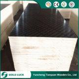a película do núcleo do Poplar de 1220X2440mm/1250 X 2500mm enfrentou o material de construção da madeira compensada
