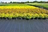 Tessuto cinese di controllo di Weed del giardino di prezzi di fabbrica con l'alta qualità