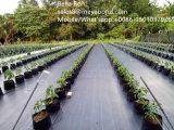 110PP GSM piso cubierto de maleza/Mat/paño Anti hierba