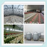 Chambre automatique d'aviculture de structure métallique de Prebab