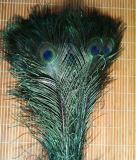 Естественное перо кабеля павлина