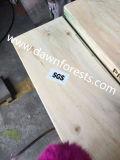 Madera contrachapada del LVL del pino del álamo para el tablón del andamio de la construcción