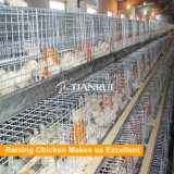 Cage de batterie automatique en acier galvanisée par Q235 de bâti de H pour élever des poulettes