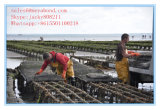 HDPE 100% Maagdelijke Materiële het Groeien van de Oester Zakken/Kooien