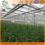 Anti-UV de efecto invernadero Hoja PC policarbonato transparente con Ce/SG/Certificado BV