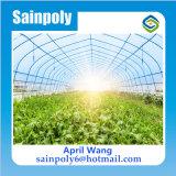 ポーランドの高品質の農業の温室