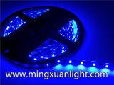 최고 밝은 12V는 5050 300SMD RGB LED 빛 지구를 방수 처리한다