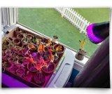 Il LED coltiva gli indicatori luminosi, pianta della clip dello scrittorio 7W si sviluppa chiaro con 360° Morsetto flessibile della molla e di Gooseneck per la pianta di giardinaggio della serra di coltura idroponica delle piante d'appartamento