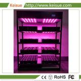 플랜트 공장을%s Keisue Hydroponic 성장하고 있는 장비