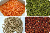 Alimentación directamente de fábrica de lentejas indias clasificador de color