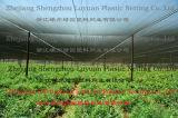 L'ombre Net - 2, l'Agriculture, le soleil de l'ombre, Wire Mesh, ombrage, Net Shadenet