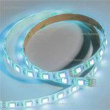 Illuminazione di striscia di volt 5050SMD LED dell'indicatore luminoso di natale di marca 24V RGBW