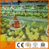 Strumentazione dell'azienda avicola con la tettoia d'acciaio del pollo di basso costo