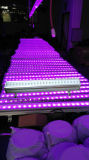 24X10W RGBW LEDの壁の洗濯機ライト/LED段階ライトLED効果ライト